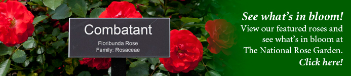 GardenButtonWide