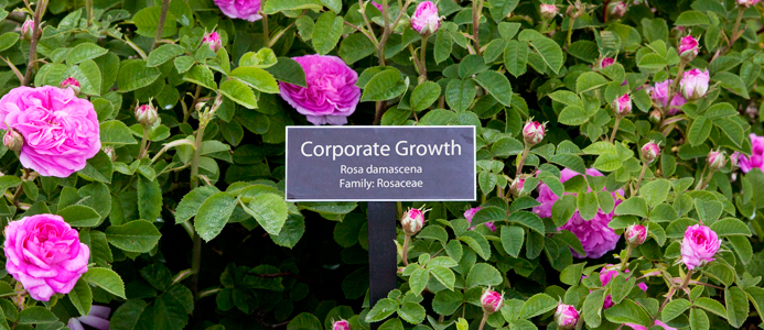 CorporateGrowth